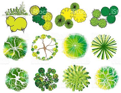 landscape design elements vector illustration set of treetop symbols for architectural or landscape