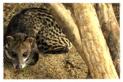 gambar hewan  aktivitasnya malam hari dunia binatang