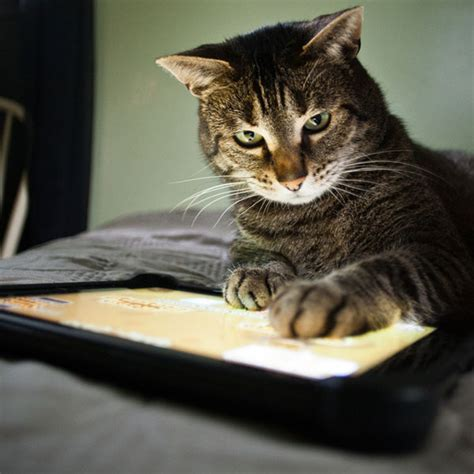 google images cats we answer google s top cat questions of 2014 catster