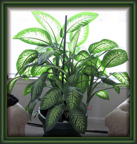 home decor with plants tips for decorating your home with plants