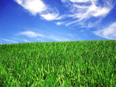 Fond D Ecran Gazon Vert Et Ciel Bleu Wallpaper D D Landscaping