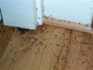 Get Rid Of Bugs In Backyard How Do I Know If My House Has Termites Economite