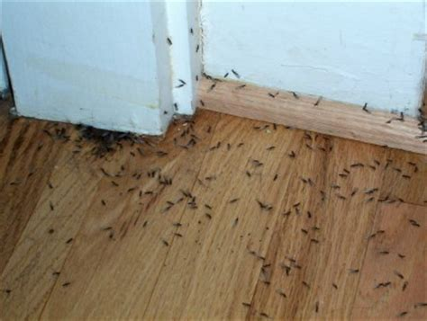 termites in house how do i know if my house has termites economite exterminators