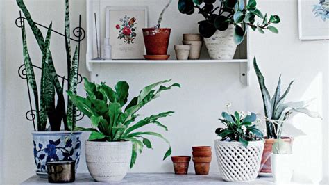 how to arrange indoor plants como cultivar plantas em interiores flores cultura mix