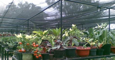 Jurus Sukses Bisnis Tanaman Hias bunga indah malino bim bisnis tanaman hias