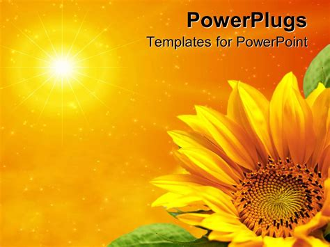 ppt themes sun powerpoint template yellow sunflower with green leaves in