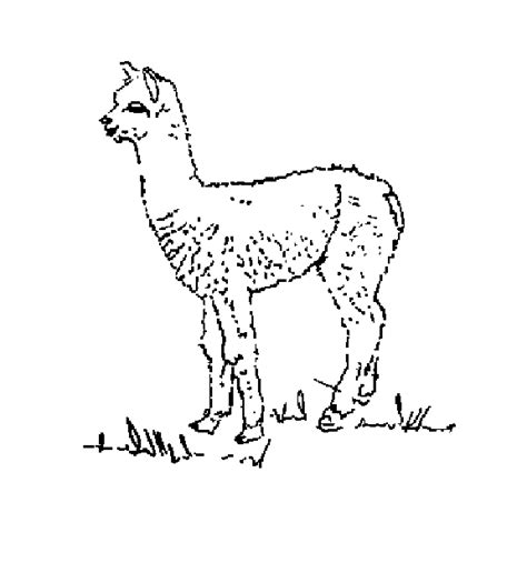 free coloring pages of alpaca