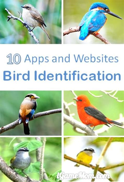 10 apps for bird identification
