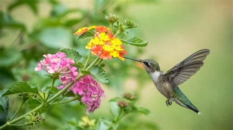 colibr fondos de pantalla 1920x1200 432 flower bird colibri fondos de pantalla hd fondos de