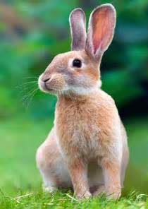 3d rabbit lenticular animated postcard greeting card