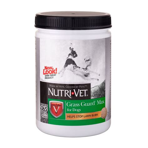 best vitamins for dogs 56 most popular supplements top tips