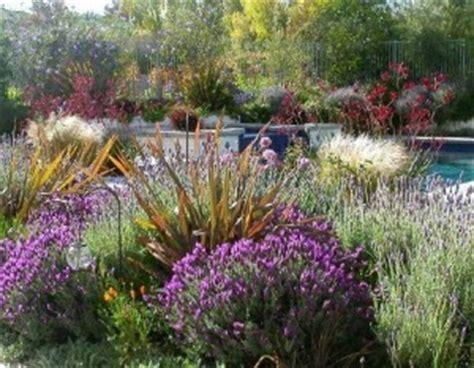 cespugli fioriti per giardino come realizzare un giardino mediterraneo consigli per