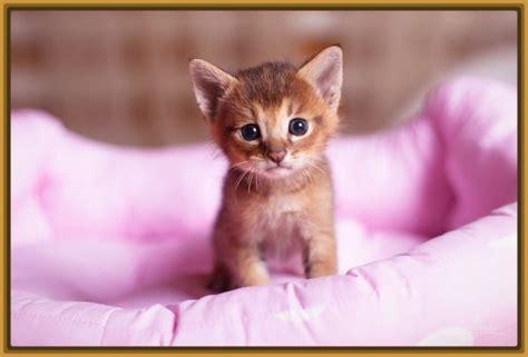 imagenes tiernas gatitos imagenes de gatos tiernos bebes