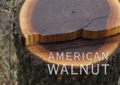 wood species american walnut bloghardwood timberfloorscom