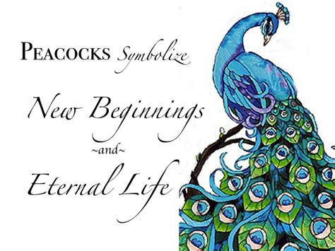 peacock feather tattoo quotes quotes about peacocks quotesgram