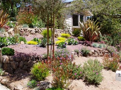 drought tolerant backyard designs drought tolerant landscaping gardening pinterest