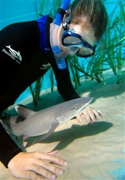 baby shark jazz cute baby animals on pinterest baby otters dolphins and