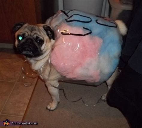 pug in costume 25 best ideas about pug costume on pug
