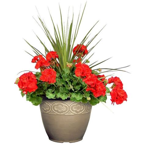 Planter Shoo by 37 Best Images About Potted Plant Ideas On
