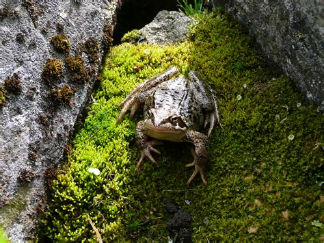 frog eye  eye frog  sweden sarek national park