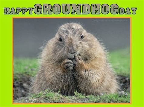 groundhog day saying groundhog day quotes sayings quotesgram