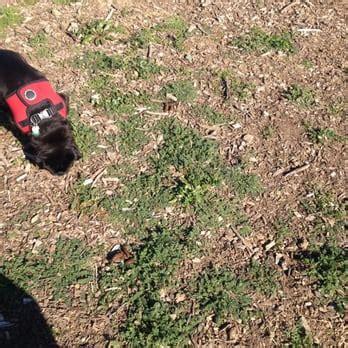 can dogs eat donuts sutters landing park 68 photos 93 reviews parks 20 28th st sacramento