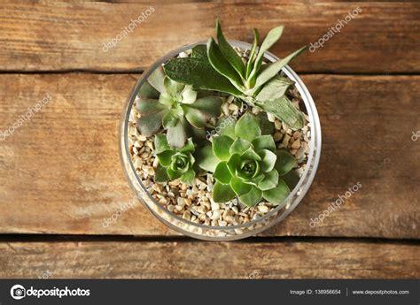 composizioni in vaso composizione di piante grasse in vaso di vetro foto
