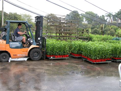 wholesale fruit tree nursery businesses for sale small business opportunities