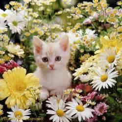 Kitten among flowers photo wp08184