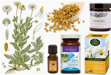 chamomile safe for cats ottawa valley whisperer chamomile herbs for dogs