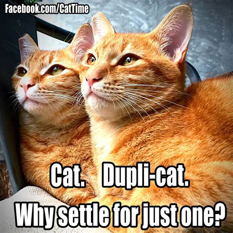 Memes Cats - cat humor 4 page 16 forums at psych central
