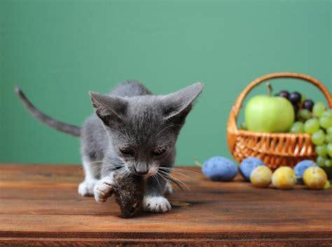 alimenti pericolosi alimenti pericolosi per il gatto mondopets it