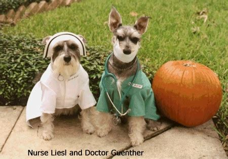 dogs in nurse and doctor costumes los pollos