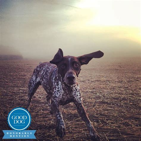 german shorthaired pointer puppies sc boone a german shorthaired pointer from columbia south carolina amazing working