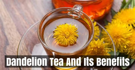 Can Detox Tea Cause Miscarriage by How To Make Dandelion Tea And Its Benefits