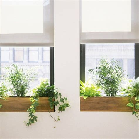 plants for office 25 best ideas about office plants on plants