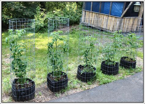 Raised Bed Tomato Trellis Grow Bags Serendipity Life Is A Garden