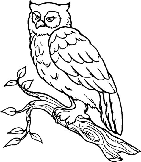 coloring book pro free printable owl template coloring home