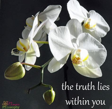 Lies Within You by The Lies Within You Whoyouare Flowers