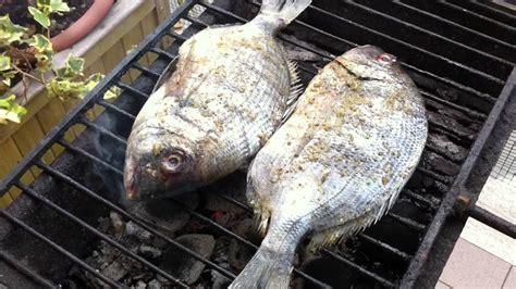 moscardini come si cucinano pesce povero cinque cose preziose da sapere