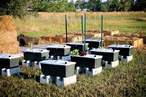 Earth Box Planter by 1000 Images About Earthboxes On Gardens Self