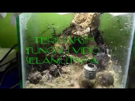 aquascape jogja murah aquascape murah meriah buget 36 ribu bahan beli di pasty