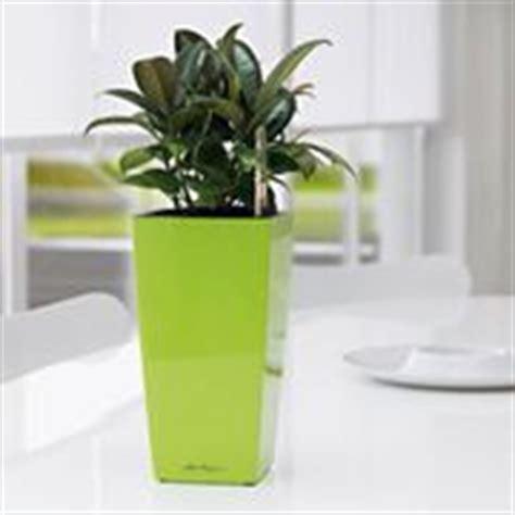 vasi per piante grandi dimensioni vasi da terrazzo vasi