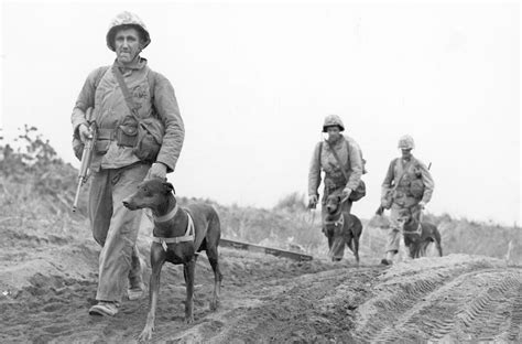 war dogs 2 the forgotten heroes of america s past wars working dogs