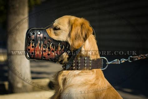 golden retriever muzzle golden retriever muzzle leather muzzle 163 75 90