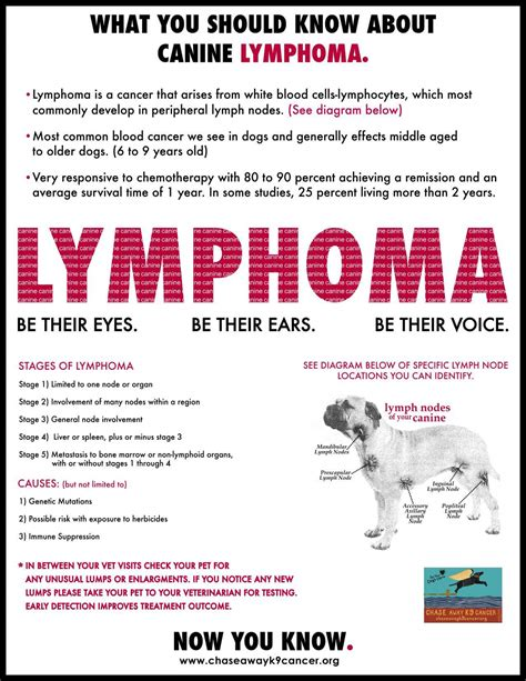 lymphoma in dogs prognosis dogs with lymphoma anuvrat info