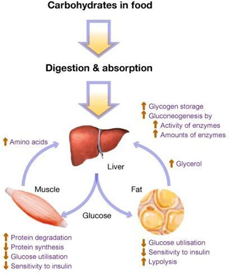 carbohydrates nutrient function 17 best images about the 6 essential nutrients on