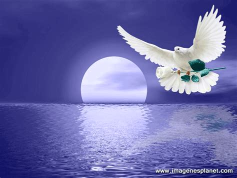 imagenes de palomas blancas grandes paloma blanca con rosa blanca rosas blancas pinterest
