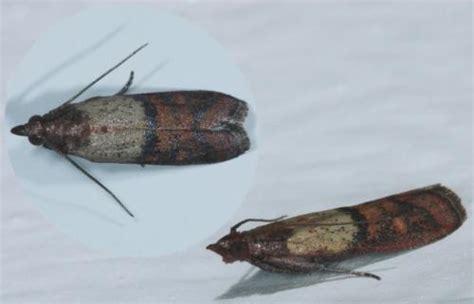 insectes dans la cuisine insecte cuisine les ustensiles de cuisine
