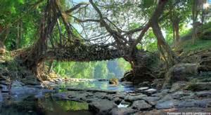 Living Bridges by Root Bridges Of Cherrapunji